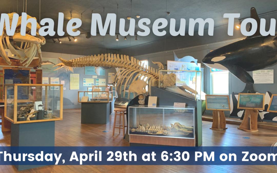 Whale Museum Tour